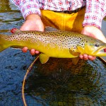 North Country Real Estate specializes in selling Marinette County WI Real Estate,Marinette County WI trout fishing
